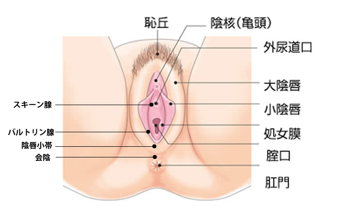 女子 性器画像
